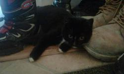 I have a very beautiful balck and white kitten. She is a girl. She loves people and other cats. She is one of the best kittens you could ever have but we have too many cats for the small area we live in. Somone dropped her off when she was a kitten and we