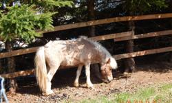 we have two 6 year old Miniature horses for sale .we would like them to stay together $400 & $200